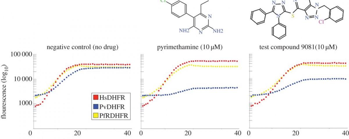 Highly pleiotropic compound